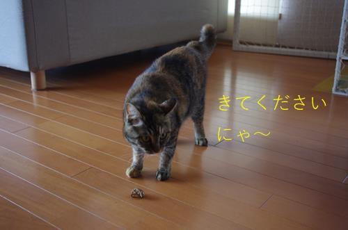 IMGP2009 (Copy).jpg