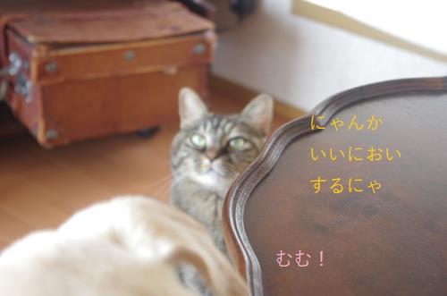 IMGP6215 (Copy).jpg